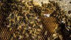 Preço pago pelo quilo do mel em MS tem alta de 36% em relação a 2020