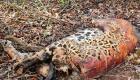 Polícia Federal investiga morte de animais no Pantanal