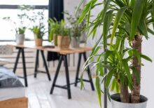 Plantas no inverno: veja os cuidados essenciais para você seguir