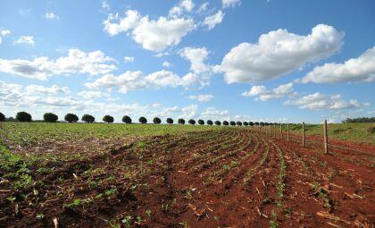 Agronegócio vê clima favorável para desenvolvimento da soja em MS