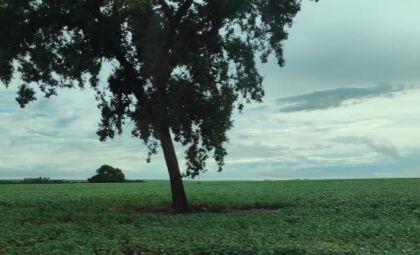 MS tem 90% das lavouras de soja em boas condições produtivas