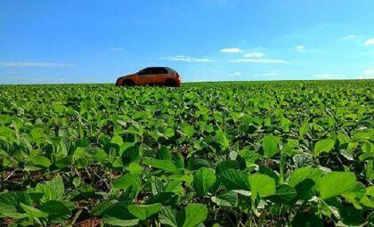 Safra de soja avança em MS com 90% das lavouras em boas condições