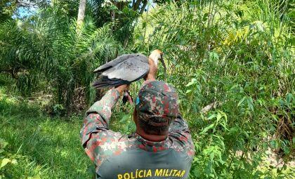 Recuperados após ferimentos, animais são devolvidos ao habitat natural em MS
