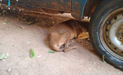 Animais são abandonados, morrem e mulher é multada em R$ 4 mil