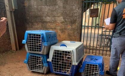 Tutor é preso em flagrante por maus-tratos e 12 animais são resgatados