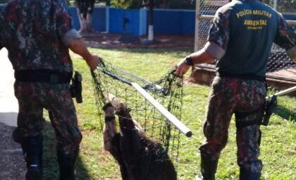 Ambiental captura 1.337 animais silvestres no primeiro semestre de 2021