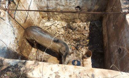 PMA resgata Anta em fossa de posto de combustível e mais animais em residências