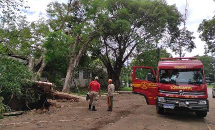 Força tarefa retirou quase 200 árvores caídas em Dourados