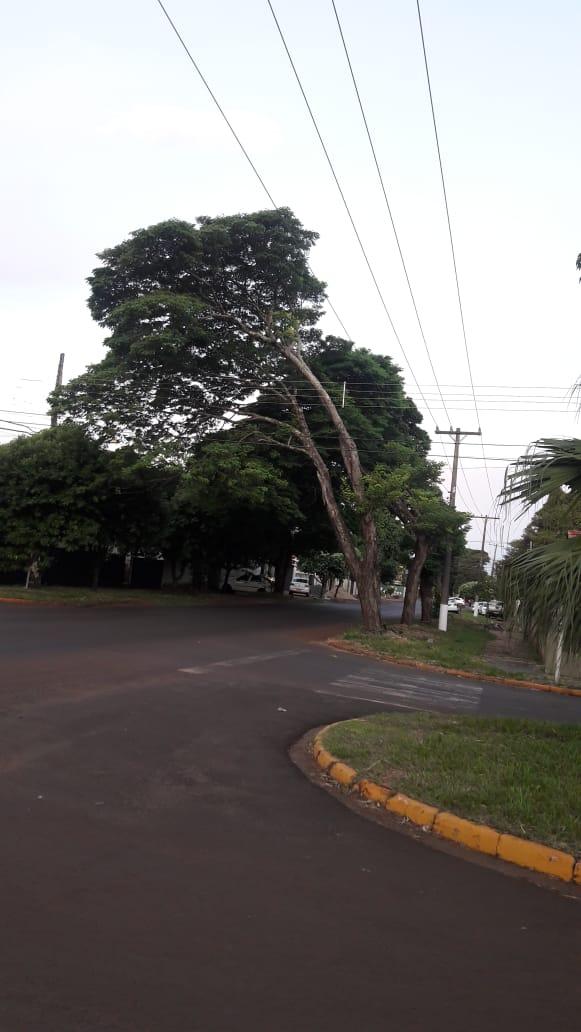 e4bd115ada9431 Popular alerta árvore prestes a cair em via movimentada de Dourados ...